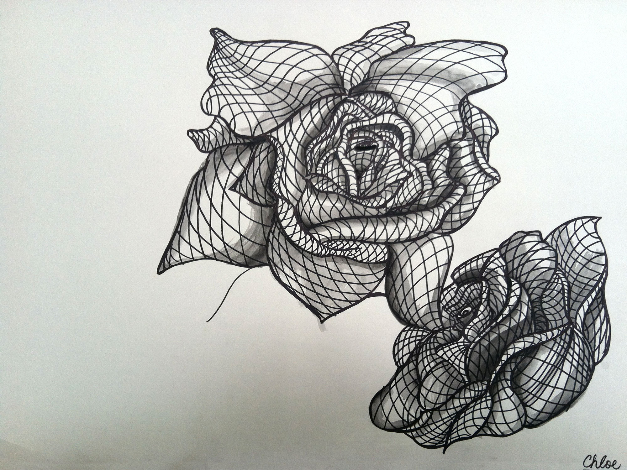 Line Drawing Of Rose Plant : Drawing talking colors